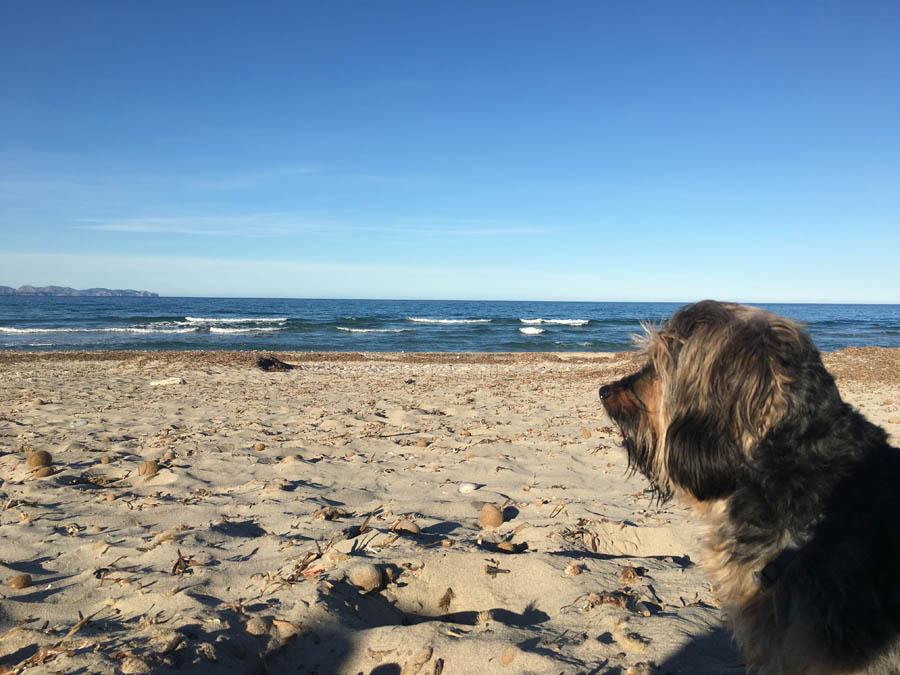 blauer Himmel, Strand, Hund, Mallorca