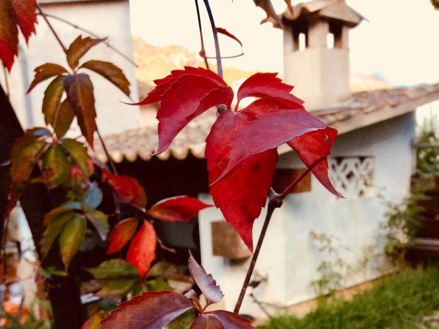 Die Mallorca-Wetter-Vorhersage am 24.10.2018