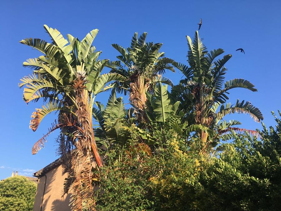 Das Mallorca-Wetter am 25.10.18