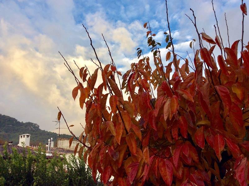 Das Mallorca-Wetter am 20.11.2018