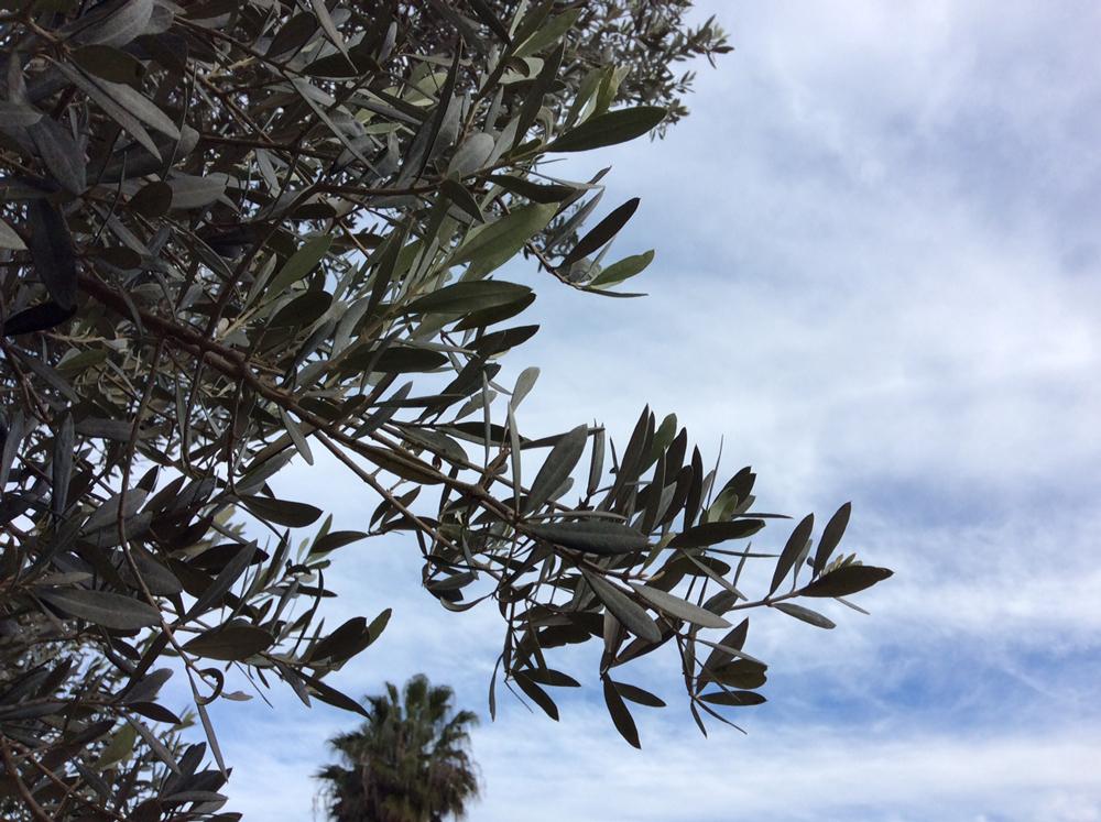 Das Wetter am 18.11.2018 auf Mallorca