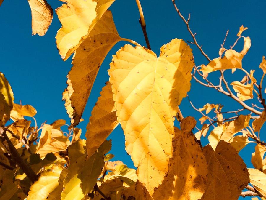 Der goldene Herbst auf Mallorca
