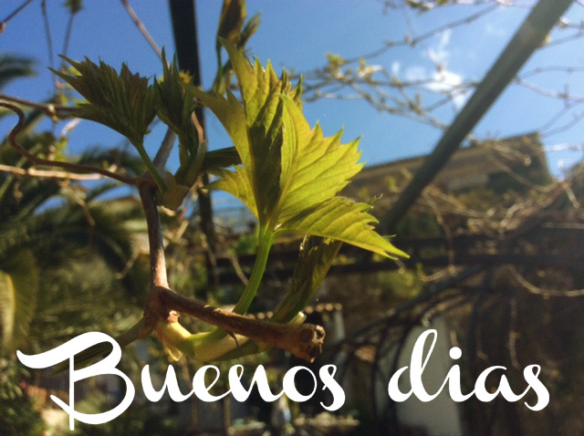 Frühlings-Wetter im März auf Mallorca